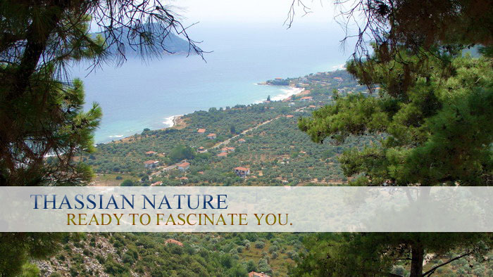 Thassos is rich in flora